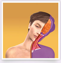 How BOTOX® works to treat Cervical Dystonia